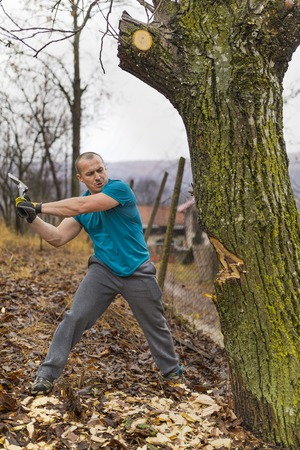 Lumberjack worker chopping down a tree breaking off many splinters in the forest with big axe. Stock Photo