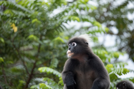 langur monkey wildlife sitting in a tree
