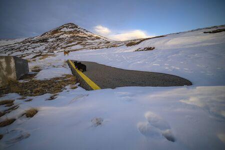 Beautiful winter landscape in the mountains in the Carpathian Mountains Romania Banco de Imagens