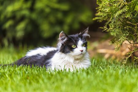 idyllic photo of a black and white cat lying in the garden in spring time.