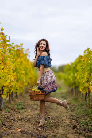 A beautiful woman with a basket of grapes in the vineyard in the autumn.