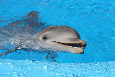 Bottle nosed dolphin in the water photo