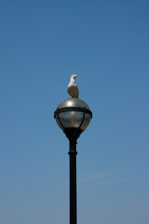 seagull sitting on lamp, blue sky - background