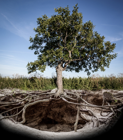 tree with roots and burrow