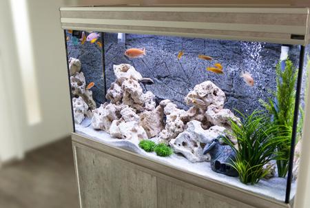 aquarium avec cichlidés poissons de lac malawi Banque d'images