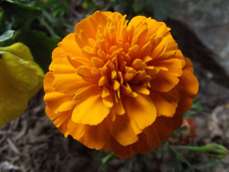 flower Stock Photo - 13862379