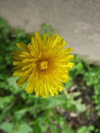 yelow: small yelow flower