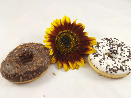 COOKIES  AND SUNFLOWER ON WHITE BACKGROUND photo