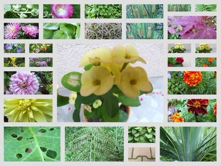 floral collage photo