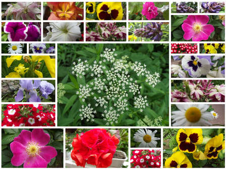 floral collage Stock Photo - 15978340