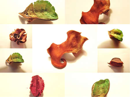 collage of dried flowers photo