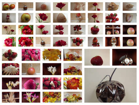 collage with flower photo