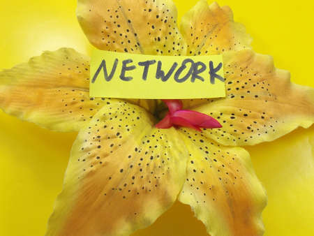 word network on a yellow background Stock Photo - 18148927