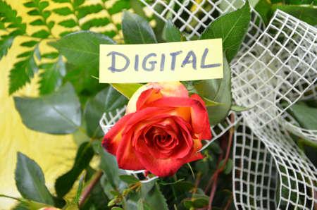 word digital Stock Photo - 18571753