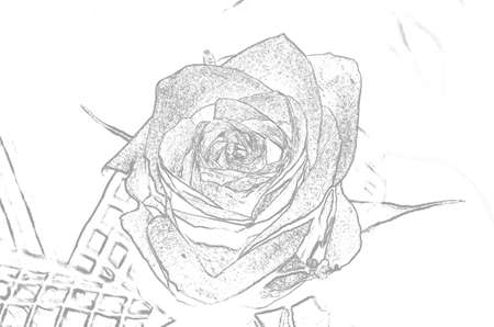 beautiful sketch of Rose hip photo
