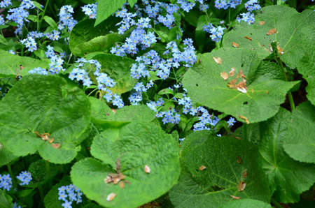 blue flowers photo