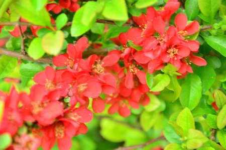 spring red flower photo
