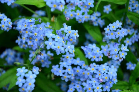 free me: blue flower