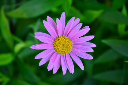 spring flower Stock Photo - 20150134