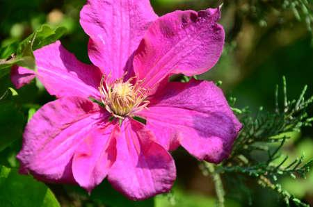 spring pink flower photo