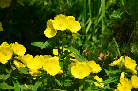 yellow fowers photo