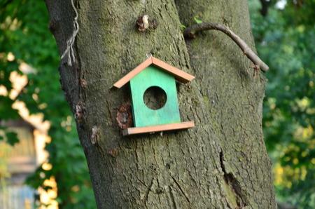 feeder for birds photo