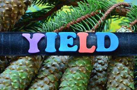 cash cycle: word yield