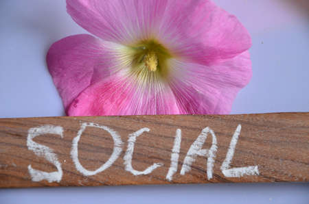 wikis: social word