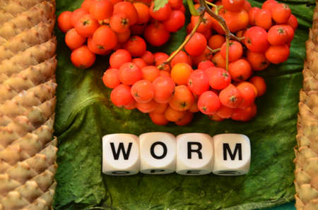 word: WORD WORM
