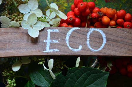 WORD ECO Stock Photo