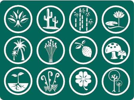 hoog gras: Icons - botanische tuin