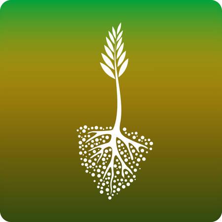siembra: Crecimiento