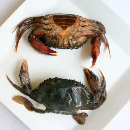 cangrejo: Soft Shell Crab
