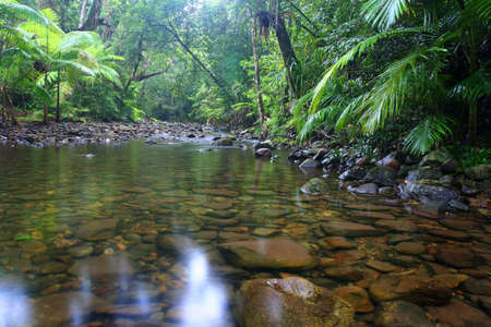 tropical rainforest: daintree forest