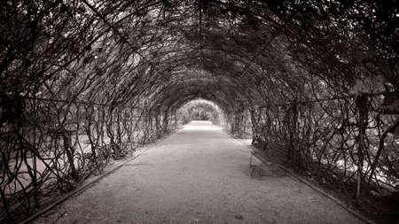 botanic: Botanic walkway with arch of foliage above. Stock Photo