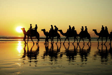 camel: Broome Stock Photo