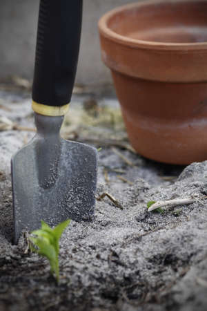 Seedling being grown, focus on the metal spade with a terracotta pot.