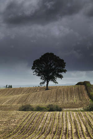 Moody one tree on a harvested field.