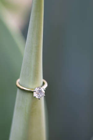 Solitaire diamond ring worn on a cactus plant.
