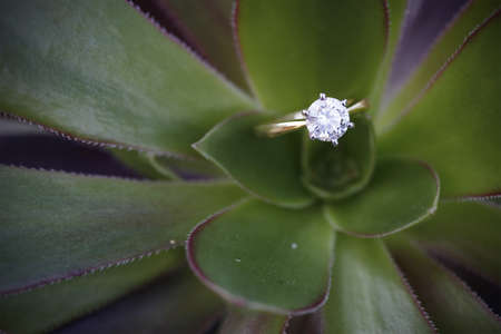 Diamond ring placed on top of green cactus.