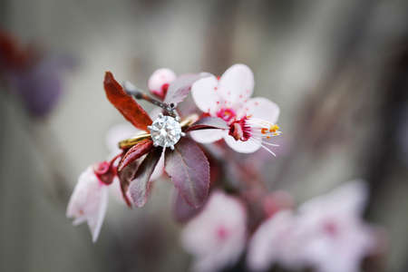 Beautiful brilliant cut diamond engagement ring blurred on flowering plum