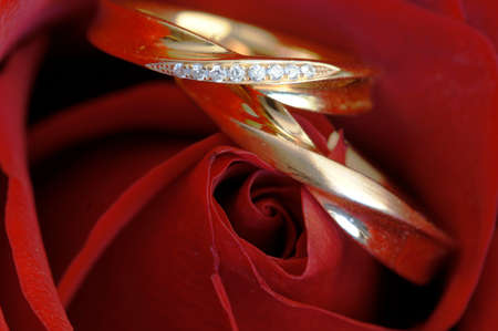 softly: Wedding bands embedded softly in delicate red rose petals.