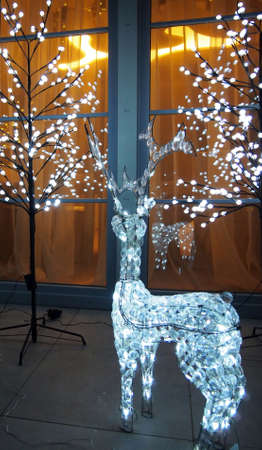 Reindeer browsing in the window