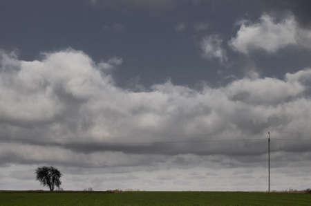 Polish field, sky and trees