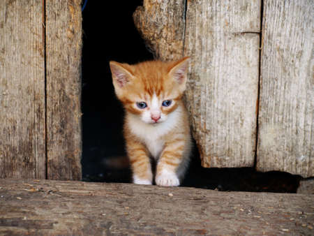 Small red kitten sitting next to a wooden plank photo