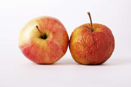 Two apples, young and old as a metaphor for aging  On a white background