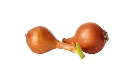 Two bulb onions, including one germinating isolated on white