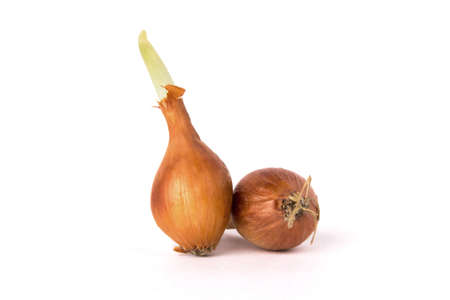 Two bulb onions, including one germinating  Stock Photo