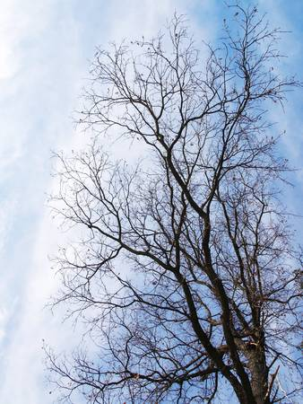 tree without leaves on a background of blue sky Stock Photo