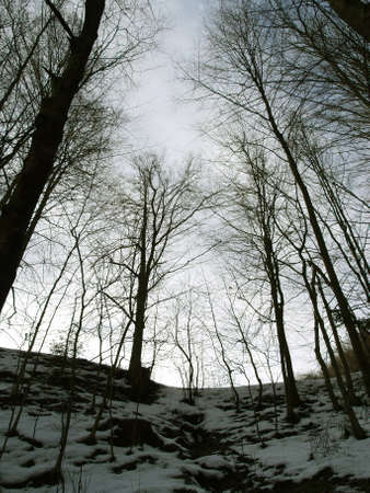 Dark winter forest in the evening